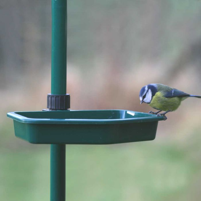 Bird Buffet Water Dish