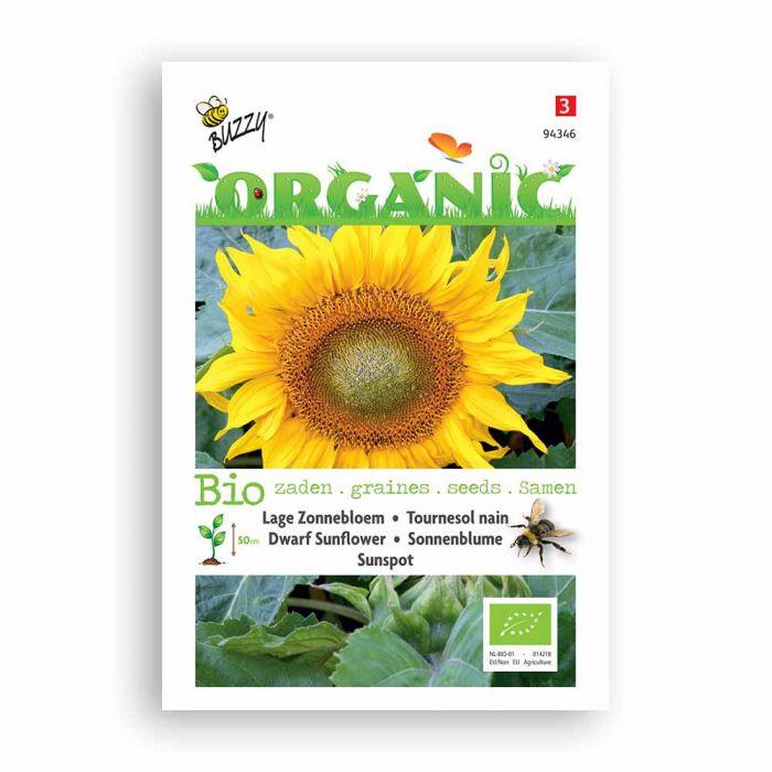 Buzzy® Organic Dwarf Sunflower - Sunspot