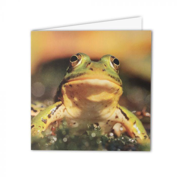 Edible Frog Greeting Card