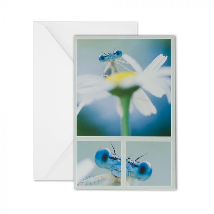 White-legged Damselfly Greeting Card