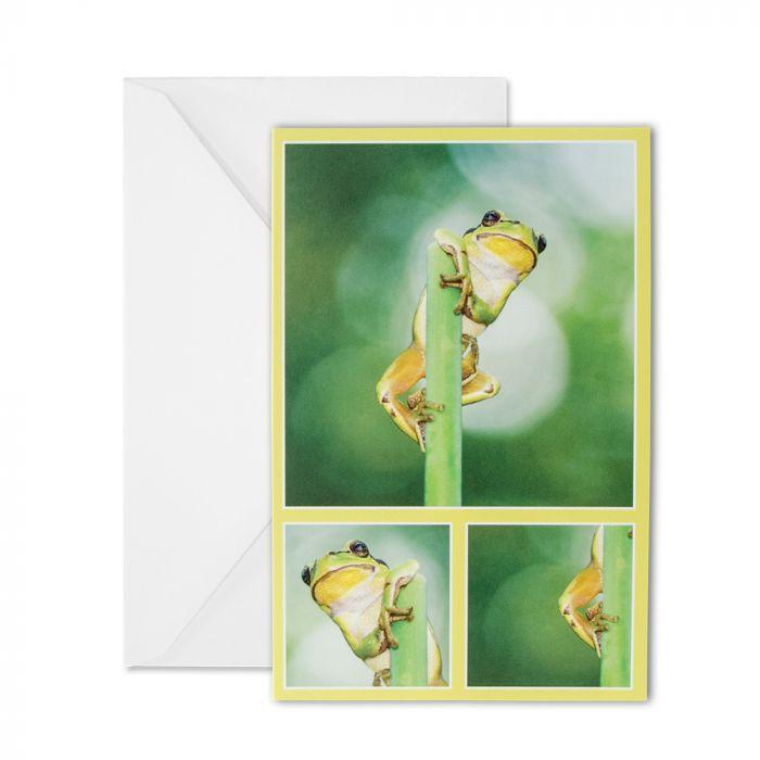 Frog Greeting Card