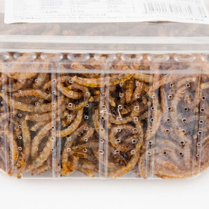 Oil Enriched Mealworms