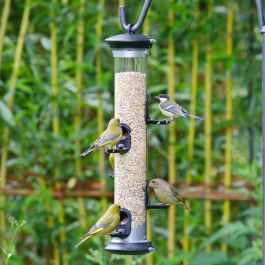 Apollo 5 port Seed Feeder