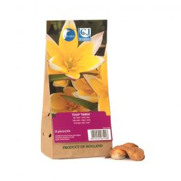 Tulip Tarda Bulbs - pack of 15