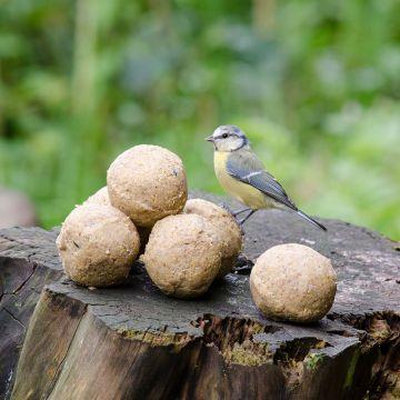 Fat Balls - with Peanuts