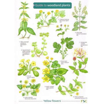 ID Chart - Woodland Plants