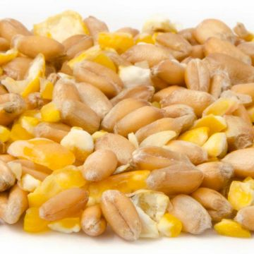 Mixed Corn