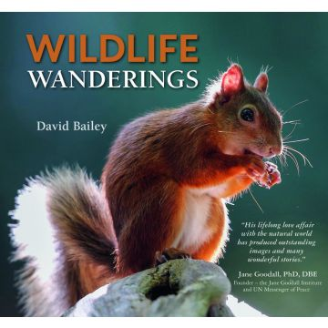 Wildlife Wanderings