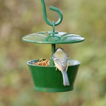 Dried Mealworm Starter Kit