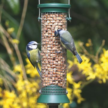 Small Green Challenger Peanut Feeder