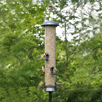 Adventurer 6 port Seed Feeder