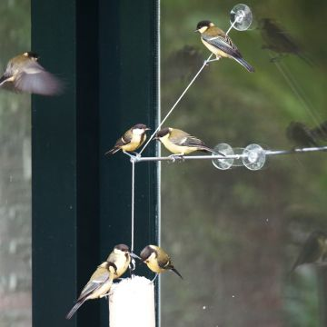 """BirdSwing"" Window Feeder Pack"