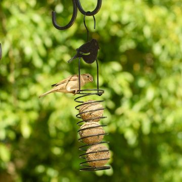 Fat Ball Feeder – Robin