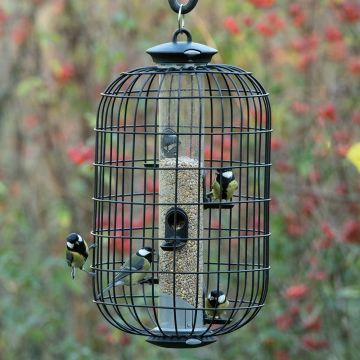 Apollo Guardian for 5 Port Seed Feeder