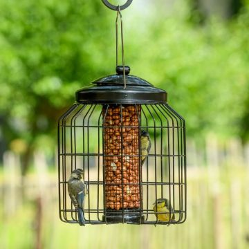 Brussels Peanut Feeder Guardian Pack