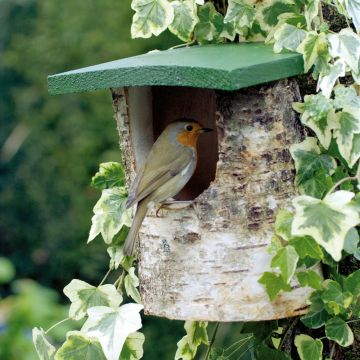 National Trust Birch Log Nest Box Open