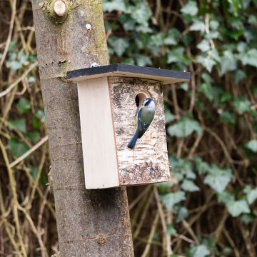Bergen 32mm Nest Box
