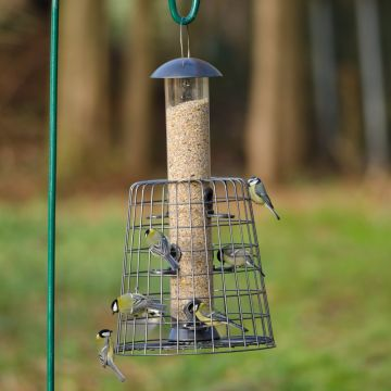 Adventurer 6 Port Seed Feeder with Guardian