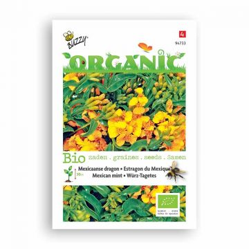 Buzzy® Organic Mexican Mint - Marigold (BIO)