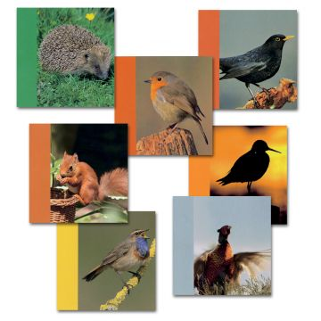 Notelet Card Pack