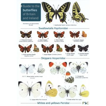 ID Chart - Butterflies of Britain