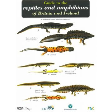 ID Chart - Reptiles and Amphibians
