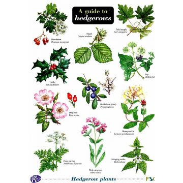 ID Chart - A Guide to Hedgerows