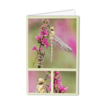 Southern Hawker Greeting Card
