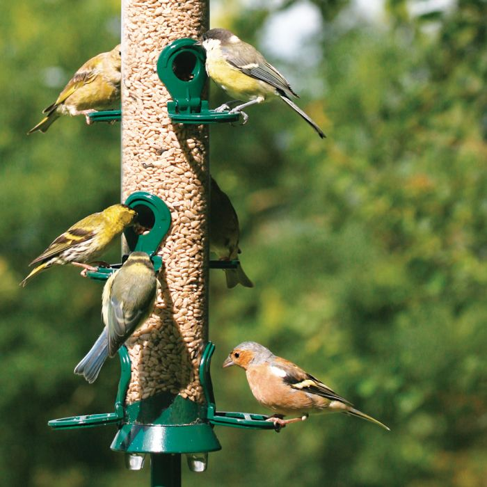 National Trust 6 Port Seed Feeder & FREE Kibbled Sunflower Hearts