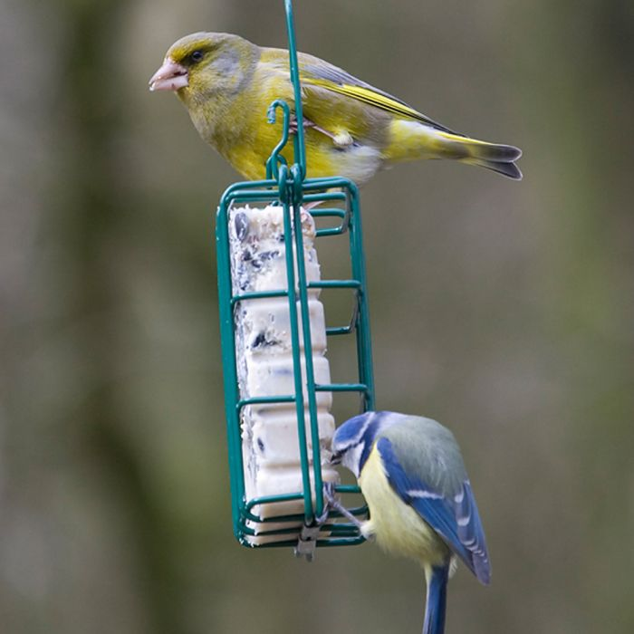 Peanut Cake Square Feeder