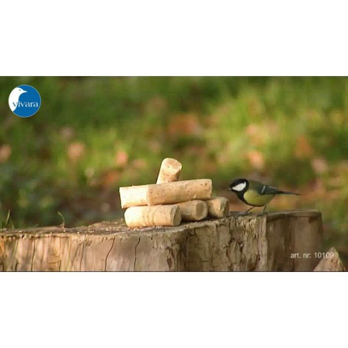 Suet Logs with Insects