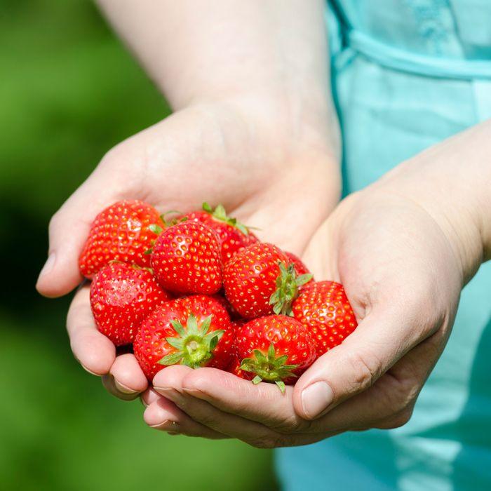 Strawberry Fragaria