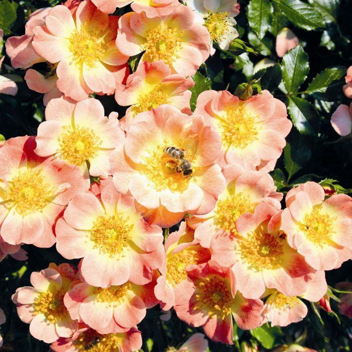 Bee Perfect Rose Set