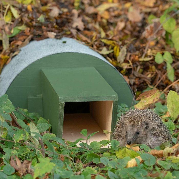 Hedgehog Feeding House