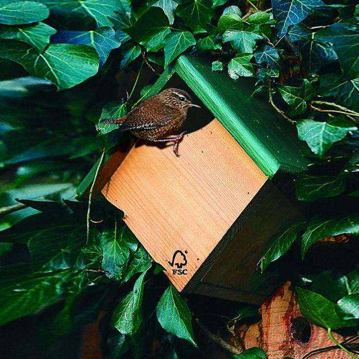 Peru Nest Box