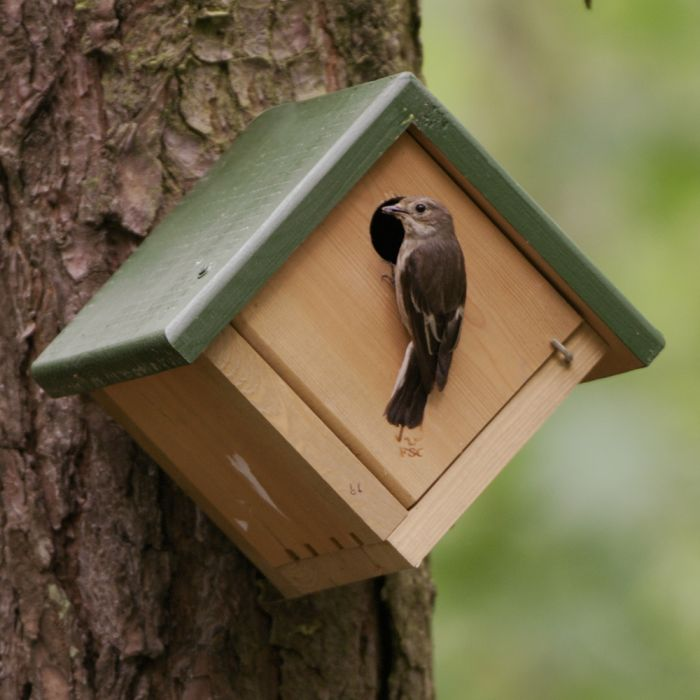 Jamaica 28mm Nest Box