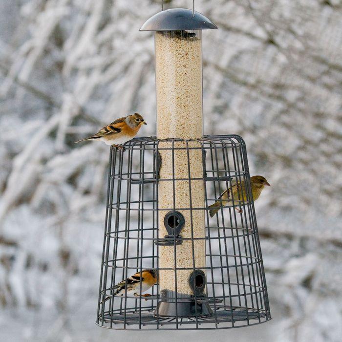 Premium Kibbled Peanuts - Bird Food