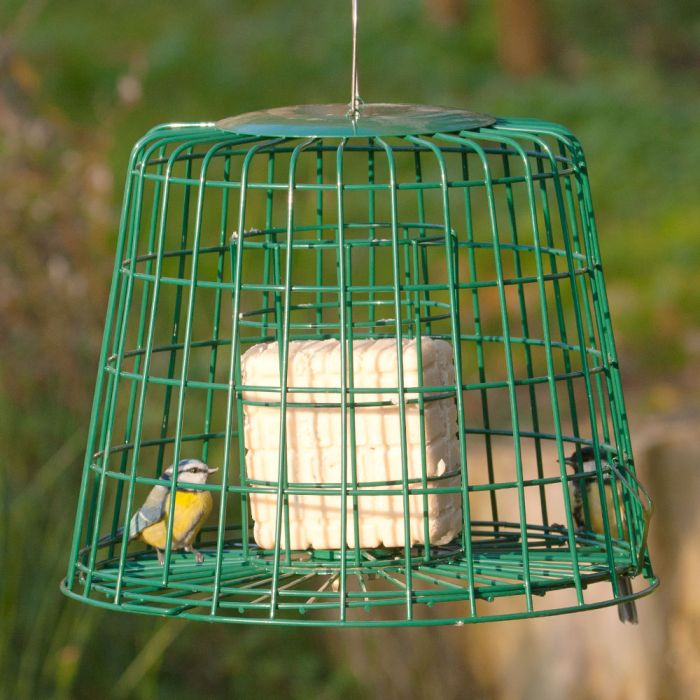 Fat Ball & Suet Feeder Guardian