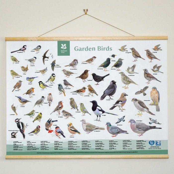 National Trust Garden Bird ID Chart Wall Hanging