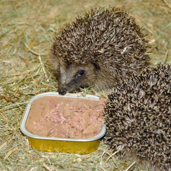 Organic Pate for Hedgehogs