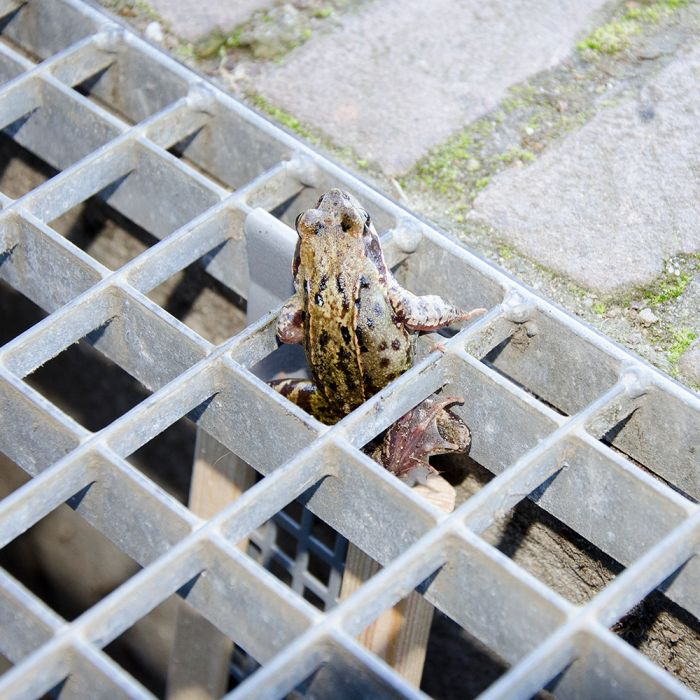 Frog Ramp - Short