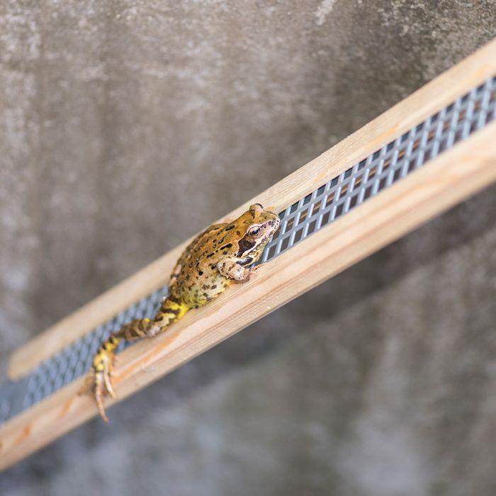 Frog Ramp - Long