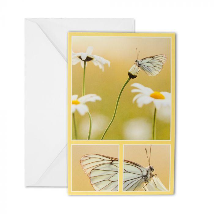 Black-veined White Greeting Card