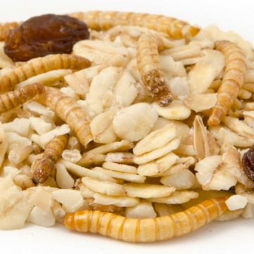 Muesli with Mealworms (2.5kg)