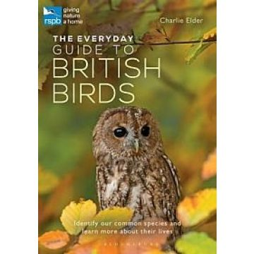 The Everyday Guide to British Birds: Identify Our Common Species and Learn More About Their Lives