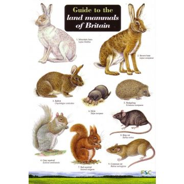 ID Chart - British Land Mammals