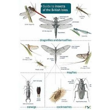 ID Chart - Guide to Insects of the British Isles
