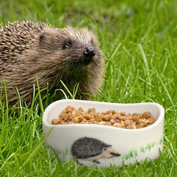 Hedgehog Starter Set