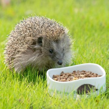Hedgehog Feast