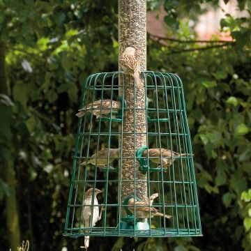 Guardian with 6 port Seed Feeder